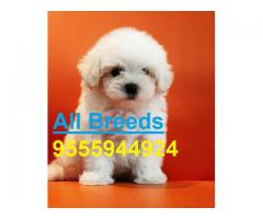 The Ultimate Quality Of Pet Shop for Maltese Puppies for sale in Delhi