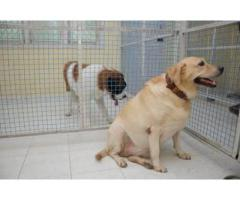 ALL DOG MATING SERVICES AVBL IN CHENNAI 8838311044