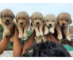 Every breed available lower than market price