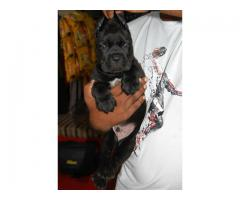 Good quality breeds available Contact 8428557069