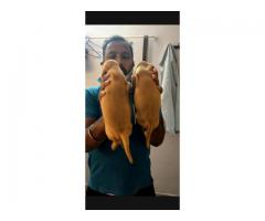 Quality puppies available