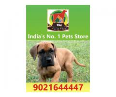DOG PUPPIES ALL BREED -9021644447