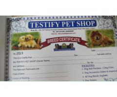 9971331250 Superb Quality Beagle Pups For sale in Testify Kennel